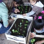 bambini-costruire-mini-orto