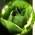 insalata-biologica-cortobio