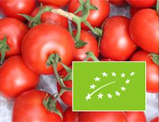 pomodoro-biologico-certificato