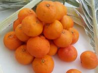 tacle-arancia-clementine