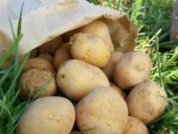 patate-bioloigiche-da-forno-cortobio