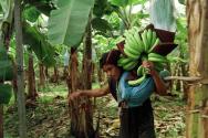 condizioni-lavoro-sfruttamento-mercato-banane