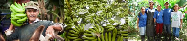 filiera-banane-solidali-ctm-produttori