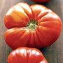 pomodoro-cuore-di-bue-licopene-cortobio