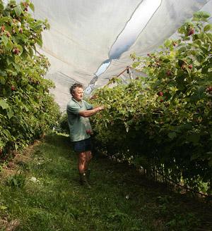 produzione-frutti-bosco-bio-brescia