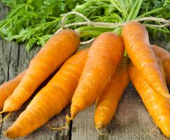 carote-con-ciuffo-bio-corotbio