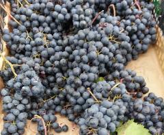 uva-tavola-vino-cortobio