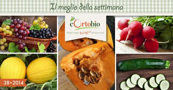 uva-zucca-delica-melone-gialletto-zucchine-ravanelli-cortobio