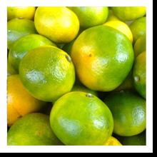 mandarini-satsuma-cortobio