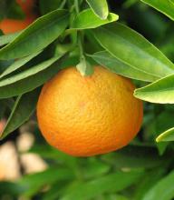 clementine-bio-policoro-cortobio