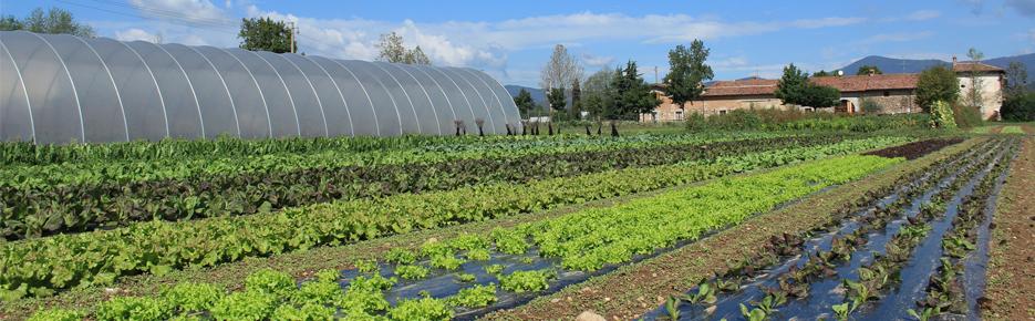 coltivazione-biologica-ortaggi-paradello