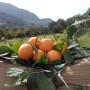 arance petyx