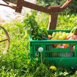 Domenica 26 Maggio: A tu per tu con i produttori